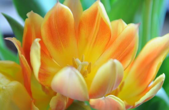 Frühlingsblumen! Der Winter ist vorbei...